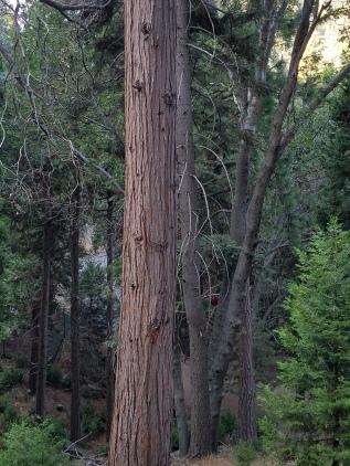Walking My Own Talk - Tree Sept 1 2017