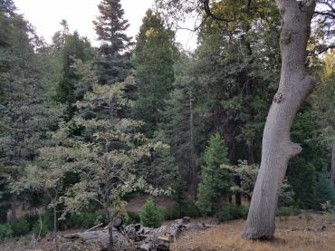 Walking My Own Talk - Woods Sept 1 2017