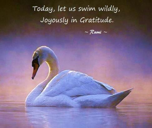 Gratitude and Forgiveness Rumi quote